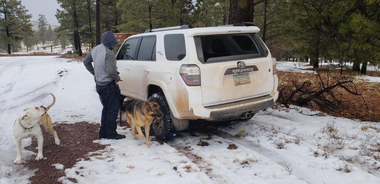 Dogs and Trucks-resized_20190214_124240-jpg