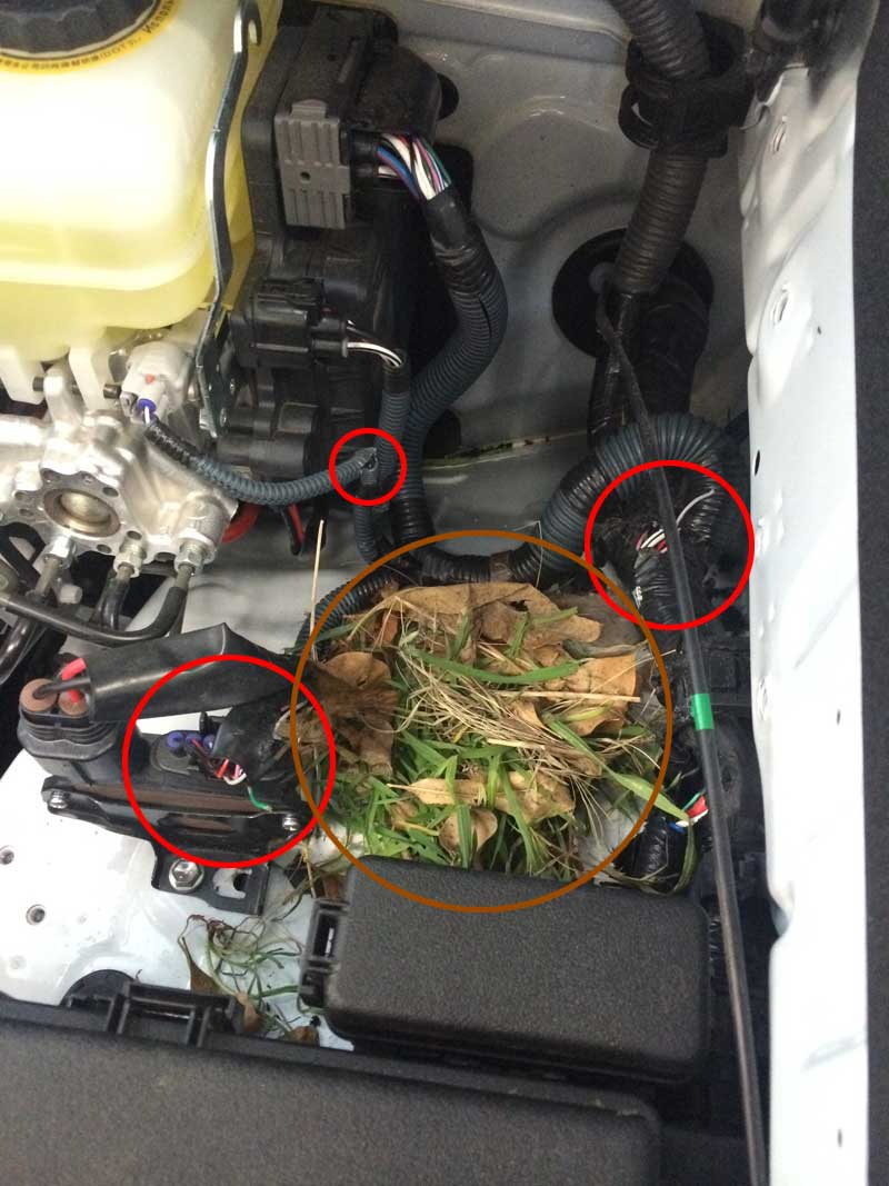 Tacoma Check Engine And Trac Off Light On Autos Post