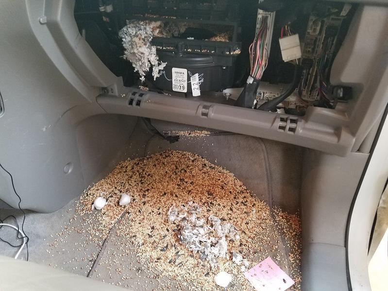 Dead rodent smell inside 4runner - Toyota 4Runner Forum