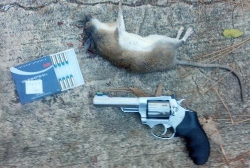 Squirrel Issues?-rat-jpg