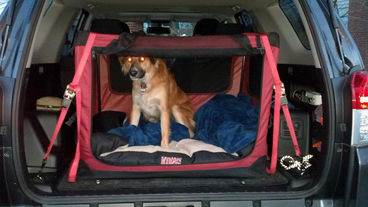 Dog Front Seat Barrier Goldenacresdogs Com