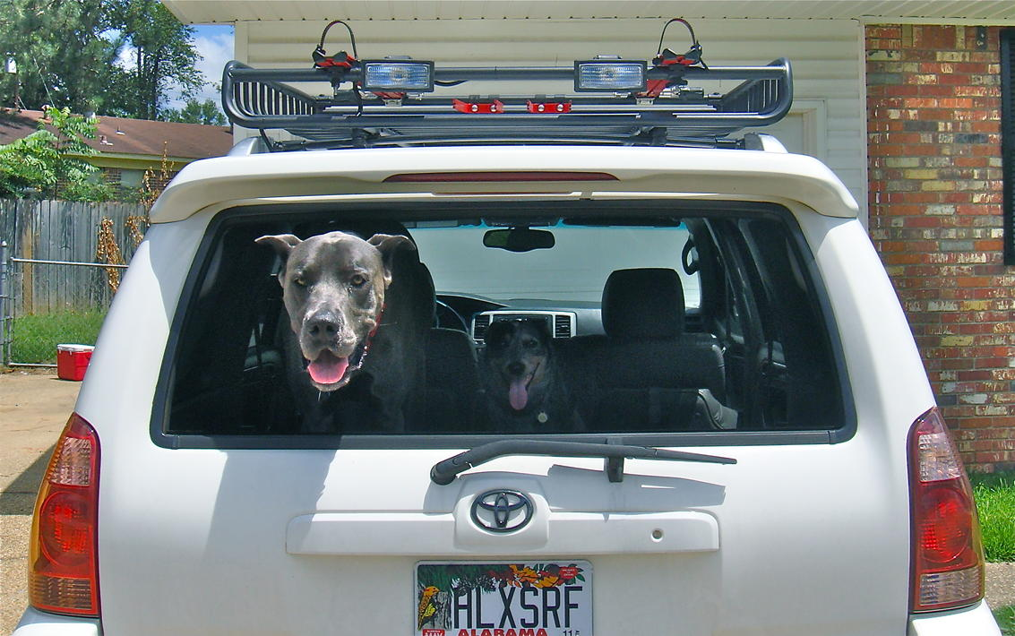 Show Off Your Dog Ultimate 4runner Dog Thread Page 19