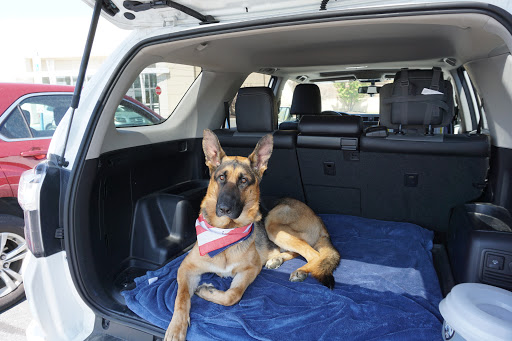 Show off your Dog, Ultimate 4Runner Dog thread-2019-06-05-jpg