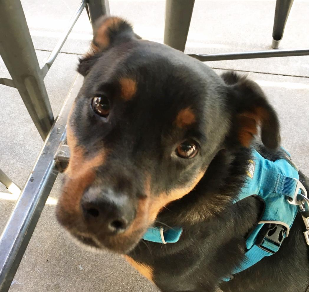 Show off your Dog, Ultimate 4Runner Dog thread-oliver-washington-jpg