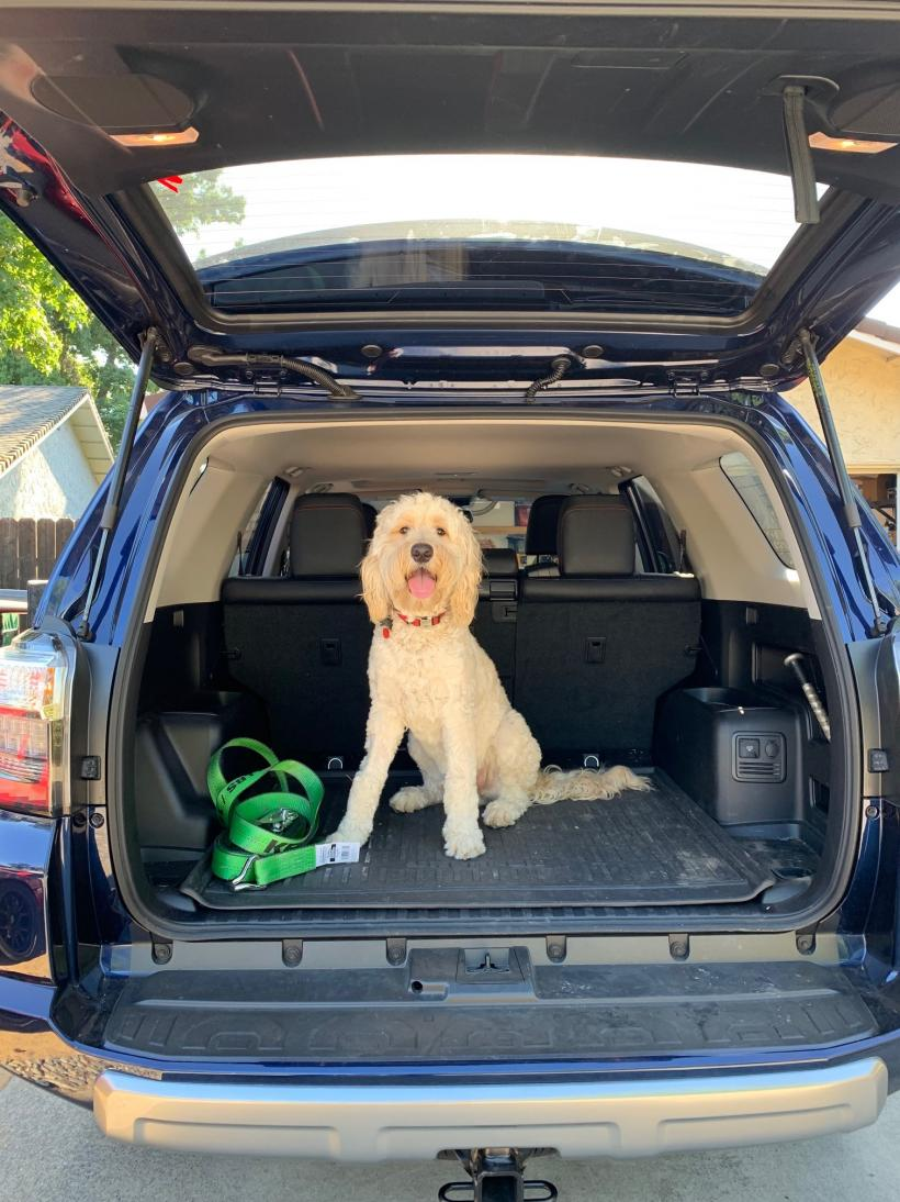 Show off your Dog, Ultimate 4Runner Dog thread-img_0501-jpg