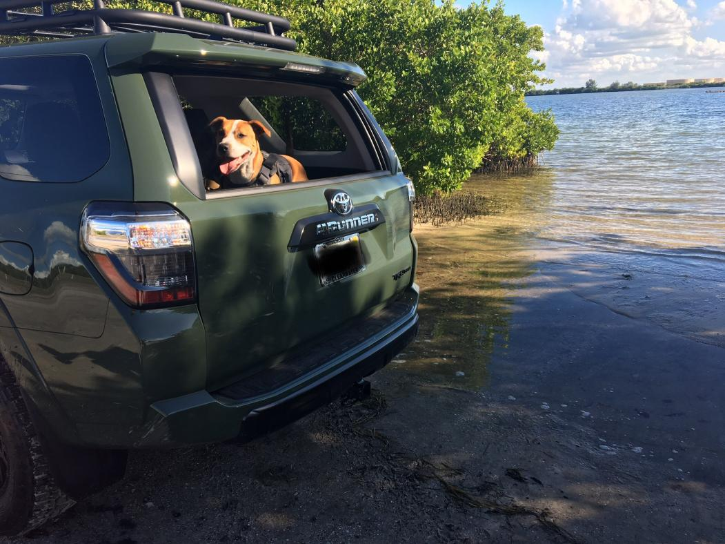 Show off your Dog, Ultimate 4Runner Dog thread-img-2403-jpg