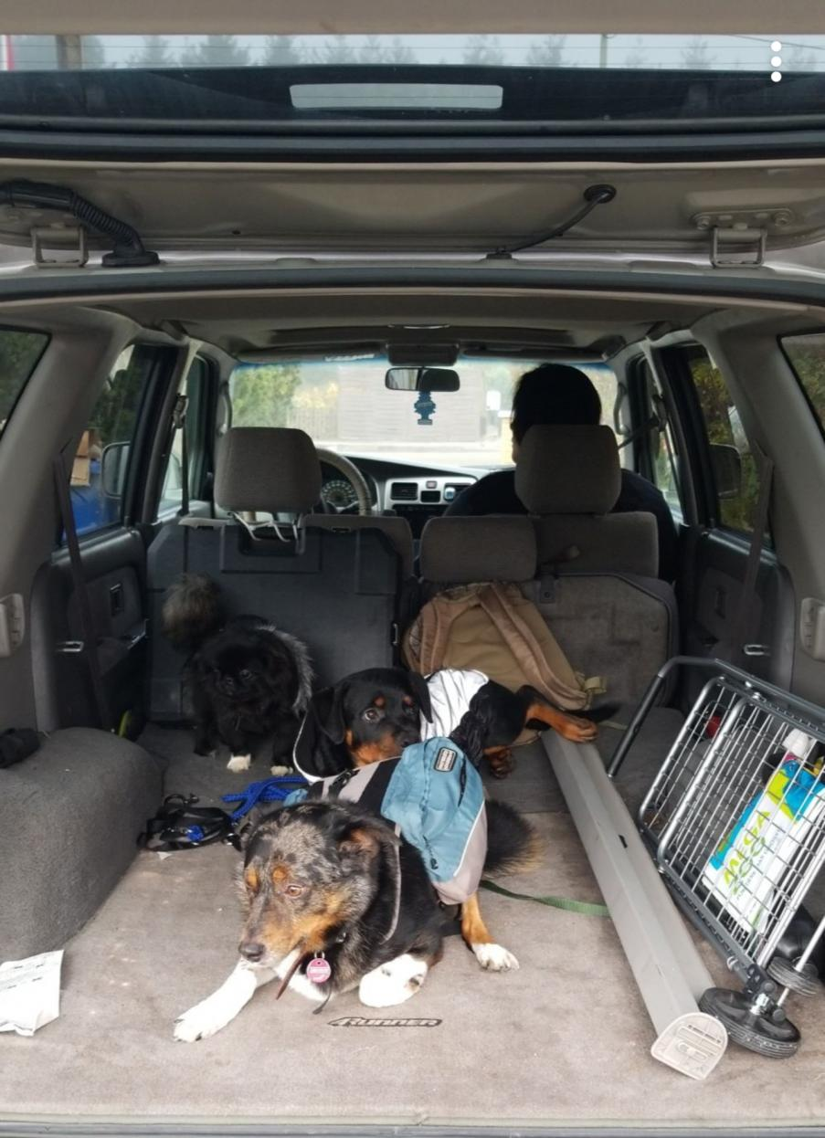 Show off your Dog, Ultimate 4Runner Dog thread-20200216_063658-jpg