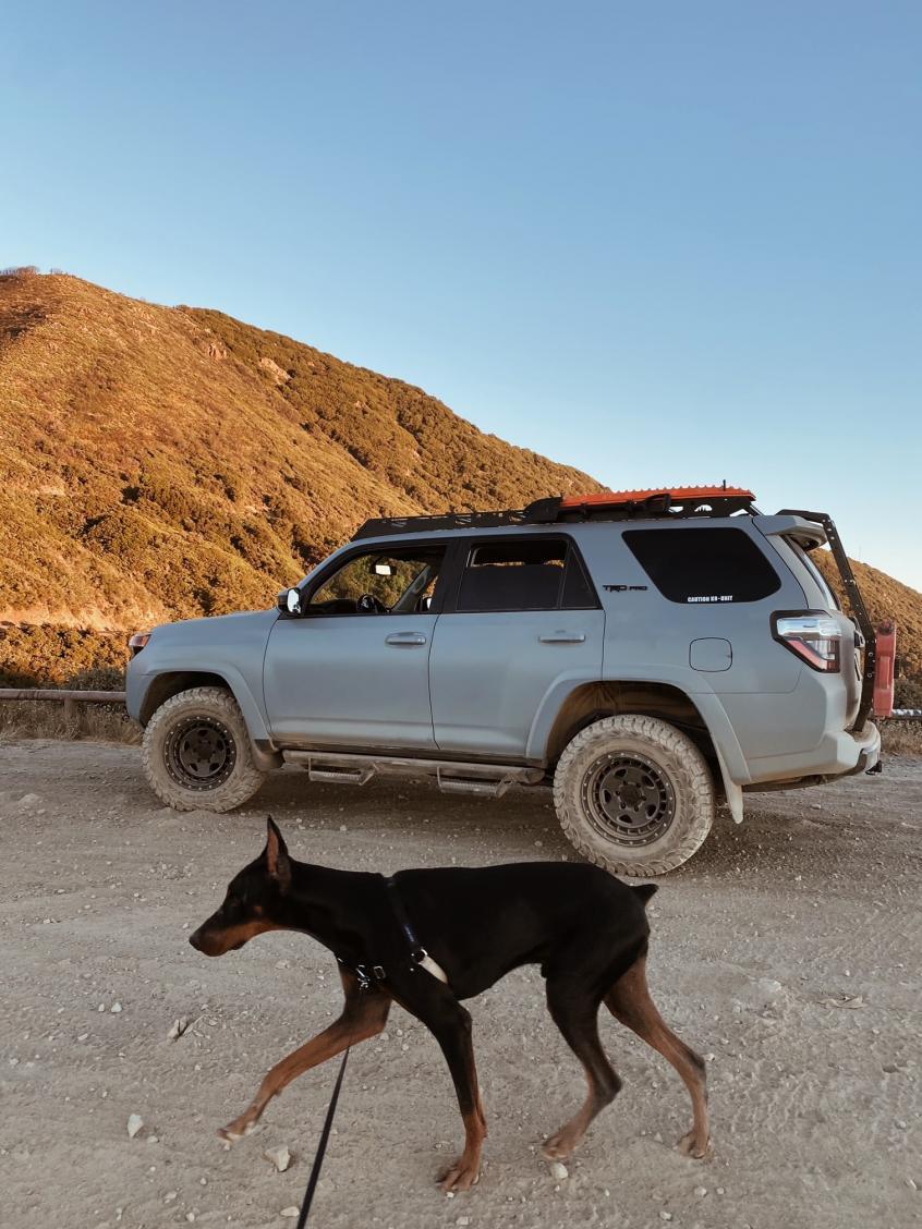 Show off your Dog, Ultimate 4Runner Dog thread-duke2-jpg