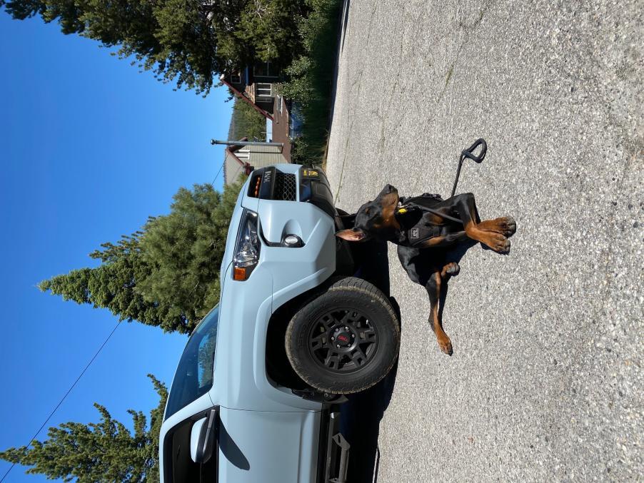 Show off your Dog, Ultimate 4Runner Dog thread-duke-1-jpg