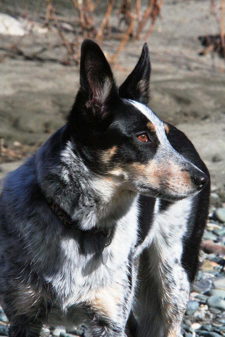 Show off your Dog, Ultimate 4Runner Dog thread-2-6-08-dillon-downriver-2-jpg