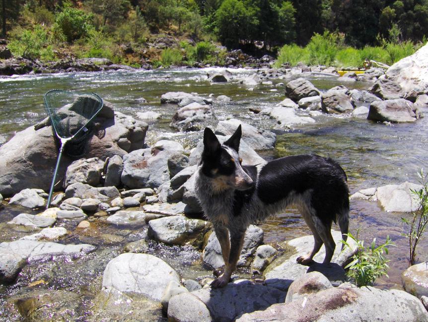 Show off your Dog, Ultimate 4Runner Dog thread-dredge-dog-1-jpg