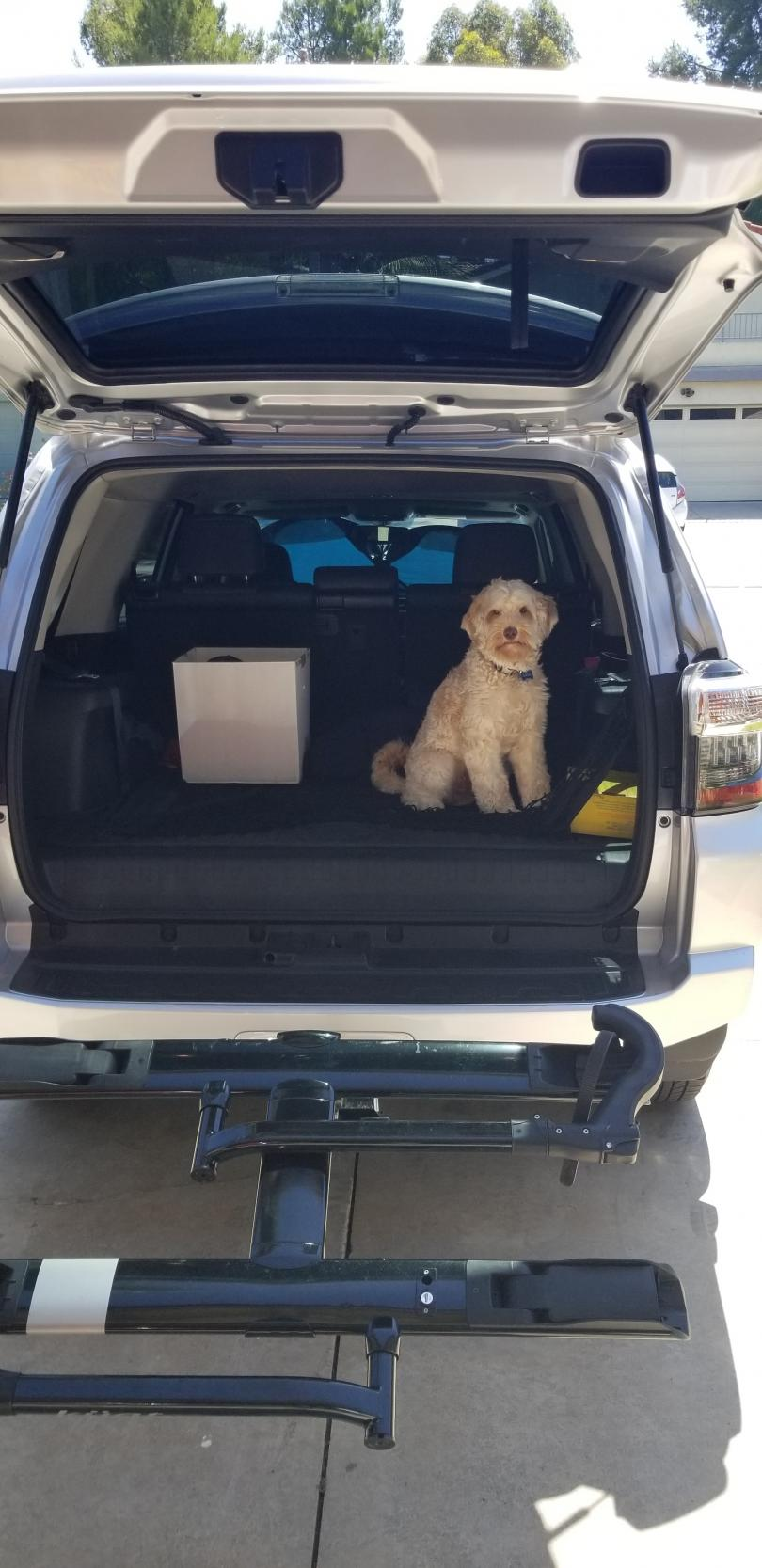 Show off your Dog, Ultimate 4Runner Dog thread-20190819_105043-jpg