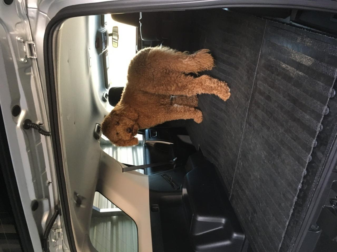 Show off your Dog, Ultimate 4Runner Dog thread-f9a19a5a-ba1b-4461-8ca7-b28aafc004c1-jpg