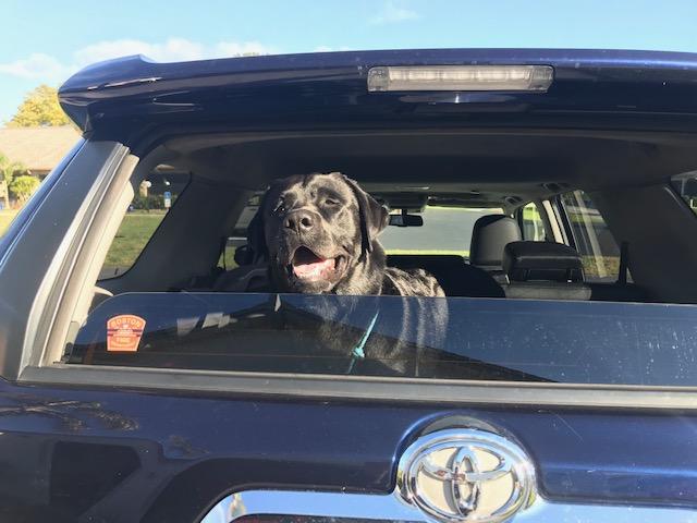 Show off your Dog, Ultimate 4Runner Dog thread-img_7475-002-jpg