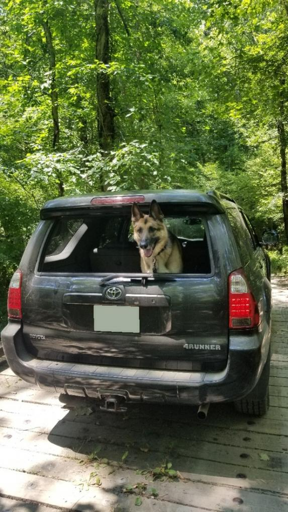Show off your Dog, Ultimate 4Runner Dog thread-20210705_144514-no-plate-jpg