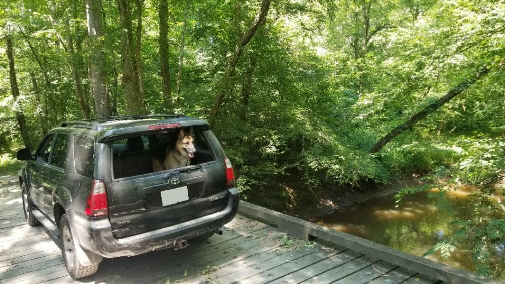 Show off your Dog, Ultimate 4Runner Dog thread-20210705_144528-no-plate-jpg