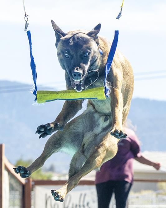 Show off your Dog, Ultimate 4Runner Dog thread-_slg4380-jpg