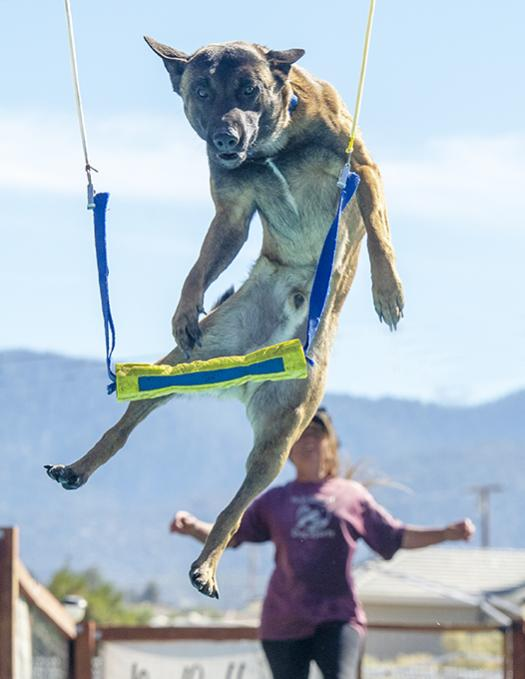 Show off your Dog, Ultimate 4Runner Dog thread-_slg4379-jpg