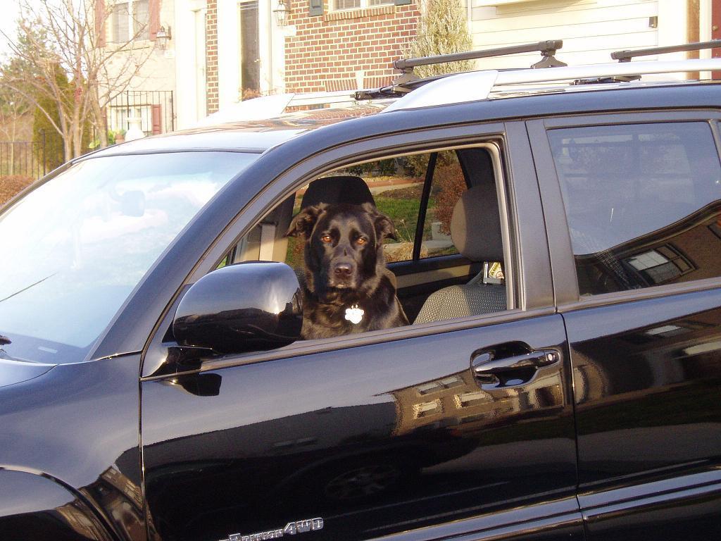 Show off your Dog, Ultimate 4Runner Dog thread-memphisdriversside-jpg