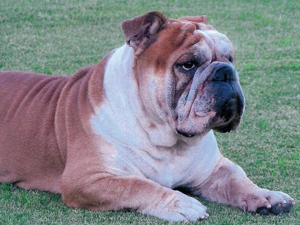 Show off your Dog, Ultimate 4Runner Dog thread-goliath1-jpg