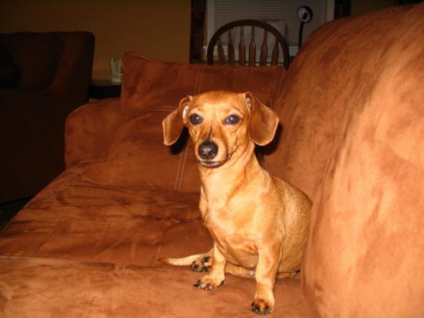 Show off your Dog, Ultimate 4Runner Dog thread-dd-jpg