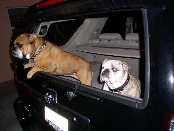 Show off your Dog, Ultimate 4Runner Dog thread-bulldogs-4runner-resize-jpg