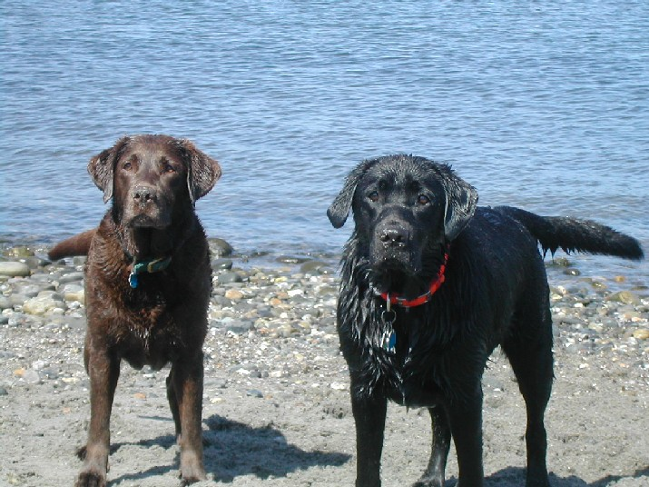 Show off your Dog, Ultimate 4Runner Dog thread-labs-007-jpg