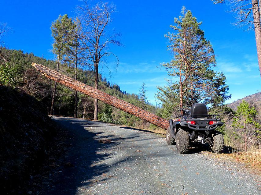 Carrying a Chainsaw-1-19-21-wind-blown-sugar-pine-near-shop-1-jpg