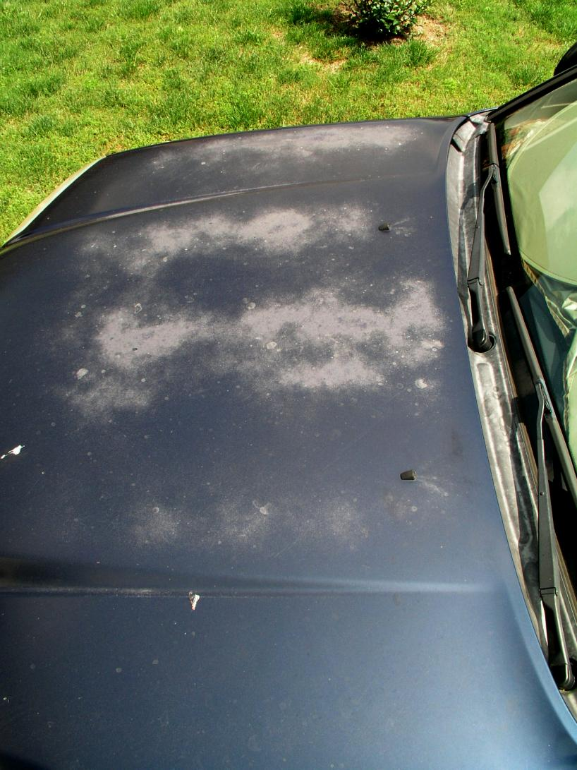 reviving oxidized clear coat-p1010124-jpg