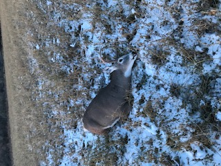 2019 Hunting season-deer1-jpg