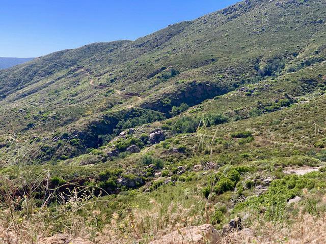 Upper Santa Ysabel Trail - Sun 6/9-img_7284-jpg